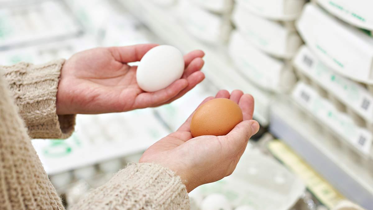 Quelles sont les sources de protéines?