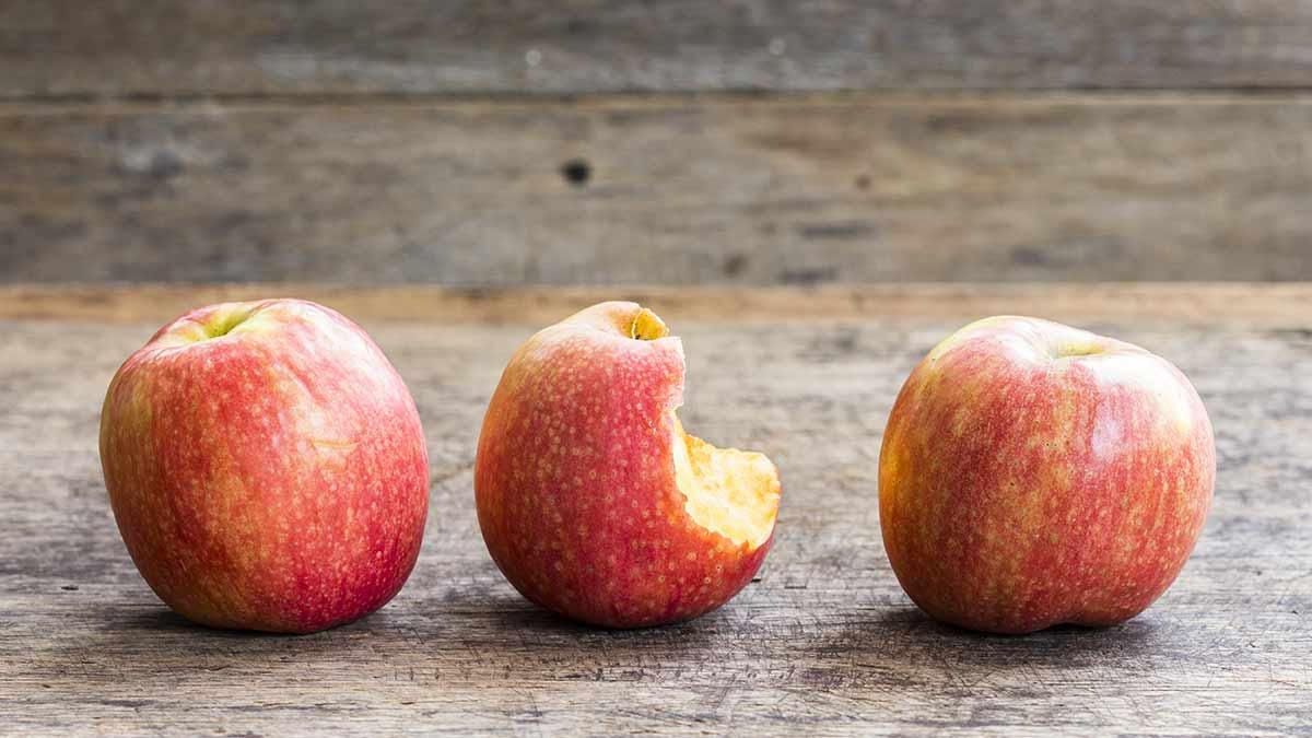 Comment se fait la culture des pommes ?