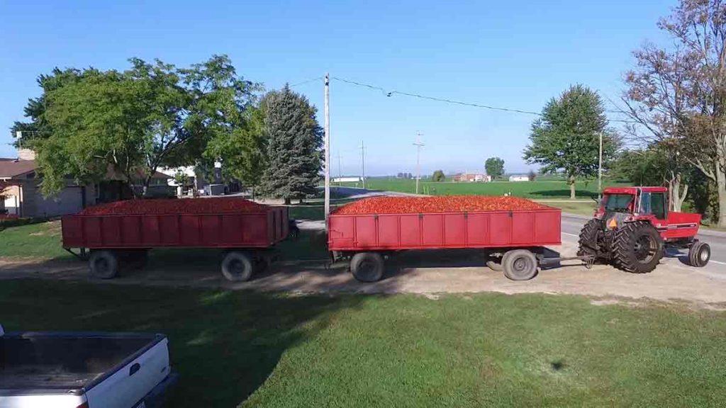 tomato-transport-trucks