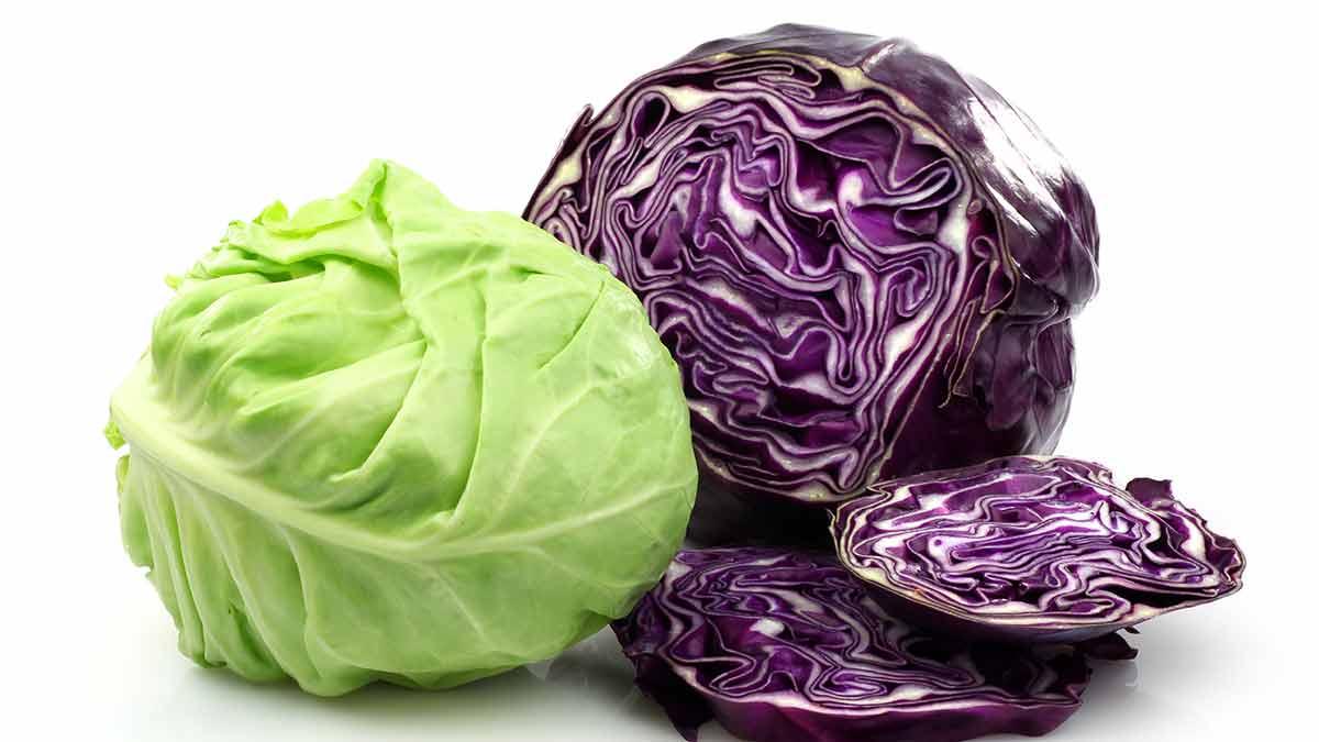 cabbage-varieties