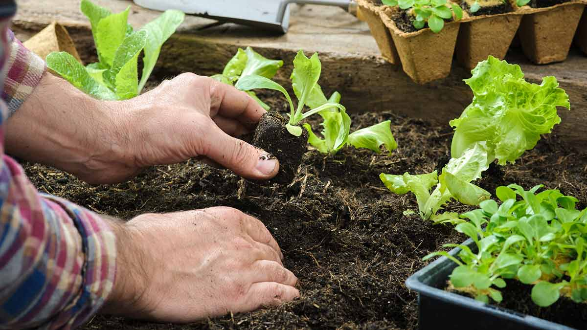 plant-vegetable-garden