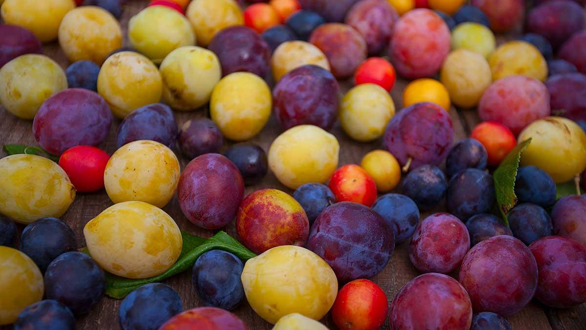 plum-varieties